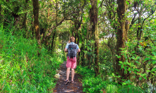 The Importance of Ecotourism