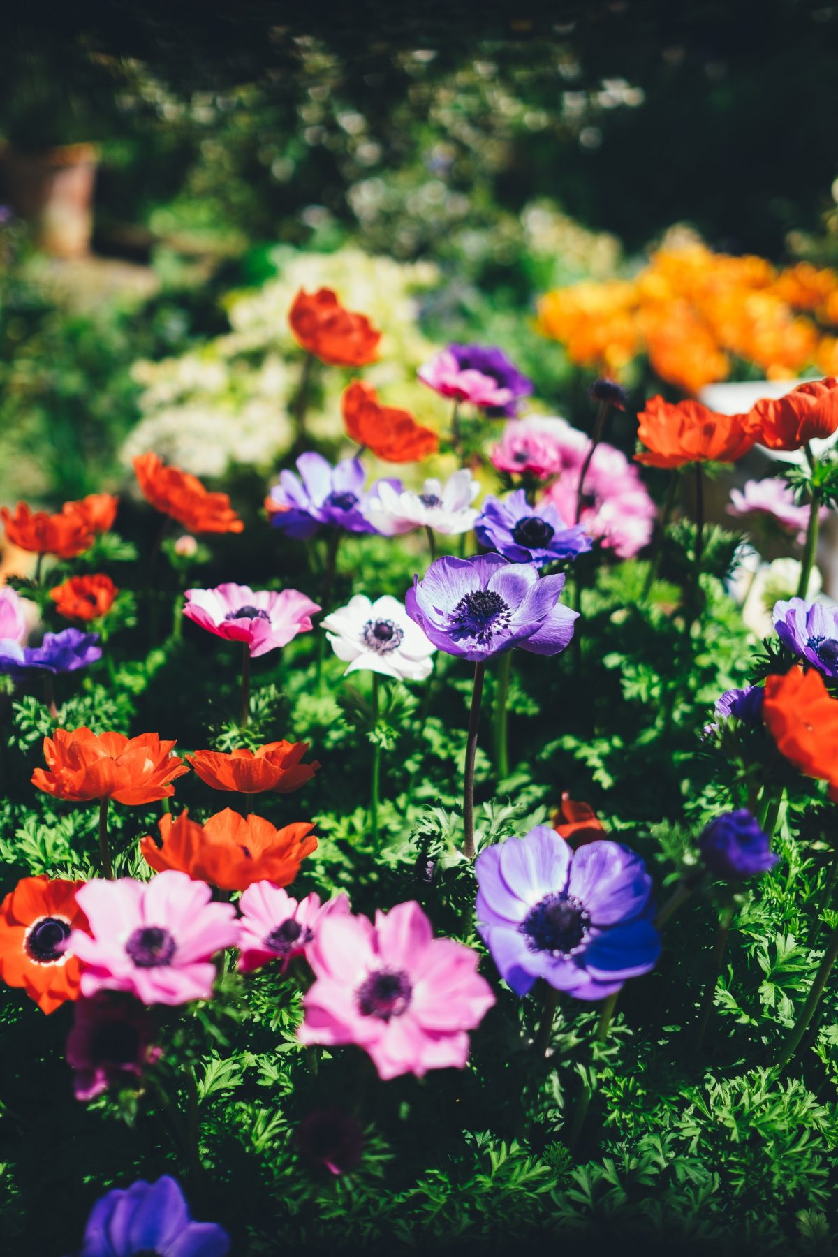 It's Time for Some Garden Care – Tips to Enhance Its Beauty