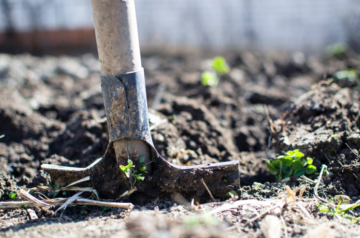 Essential Tools You Need to Create and Maintain Your Eco Garden